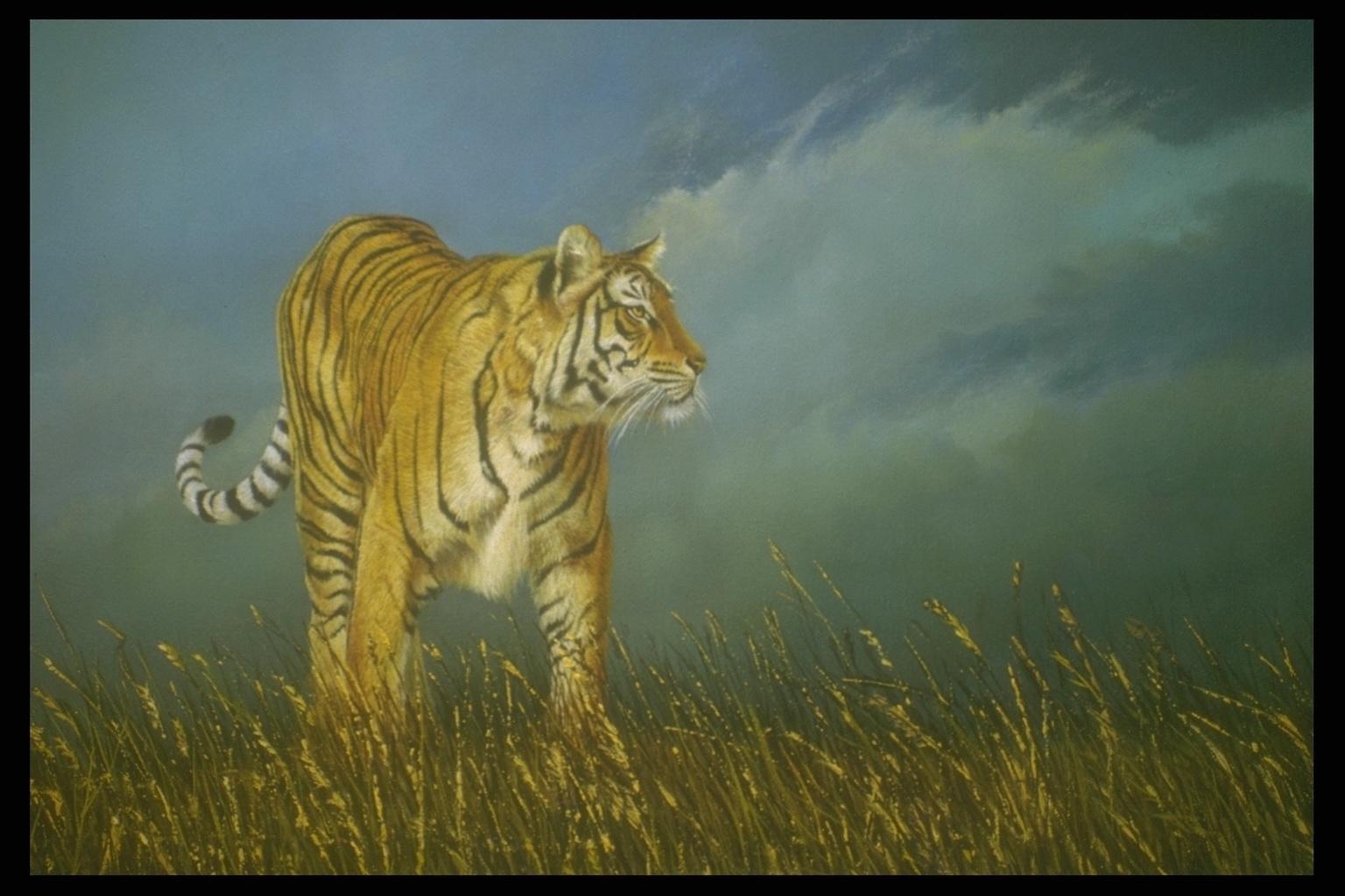 Рисунки тигрят 7