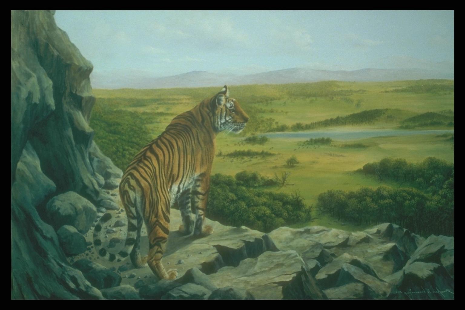Амурский тигр картинки фото
